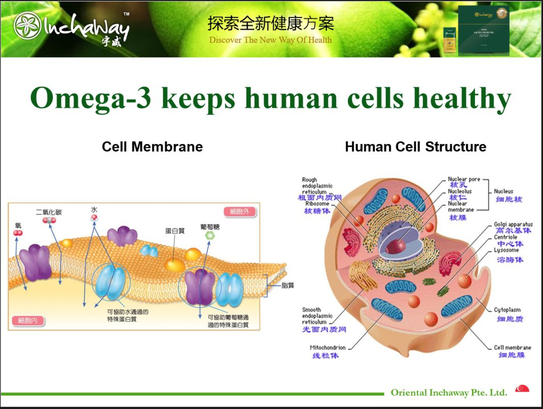 body cells need omega 3 fatty acids