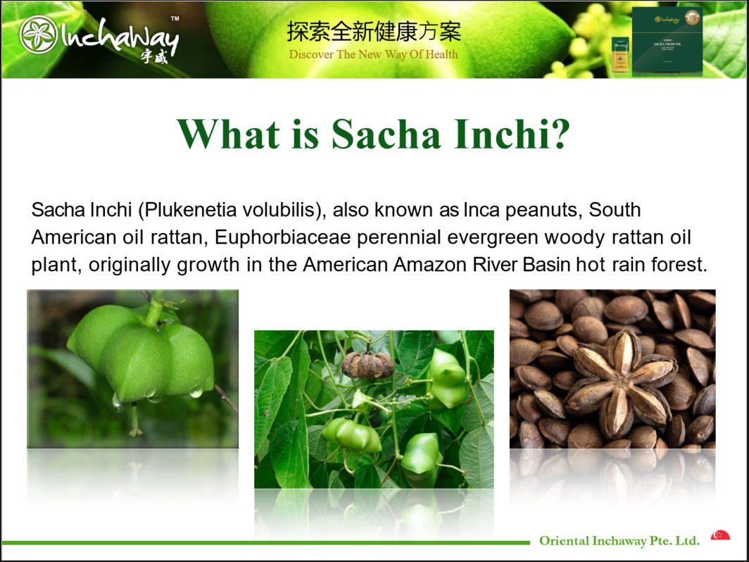 what is sacha inchi seeds