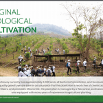 16 Inchaway Original Ecological Cultivation