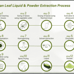 31 Pandan Leaf Extraction Process for use in Cellpro