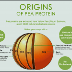 40 Origin of Pea Protein